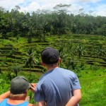 Rice terraces, Ubud, Bali